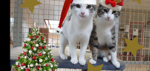 Tierische Weihnachtsgrüße.Tierische Weihnachtsgrüße Von Uns Allen Tierheim Butzbach
